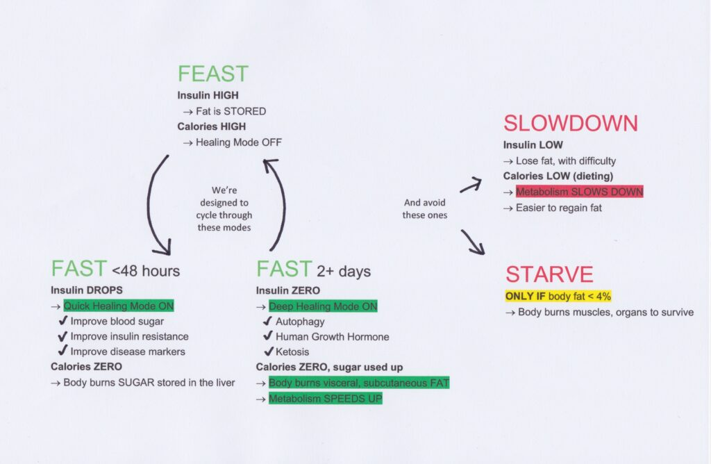 Diagram of different modes the body goes into with relation to food intake and fasting